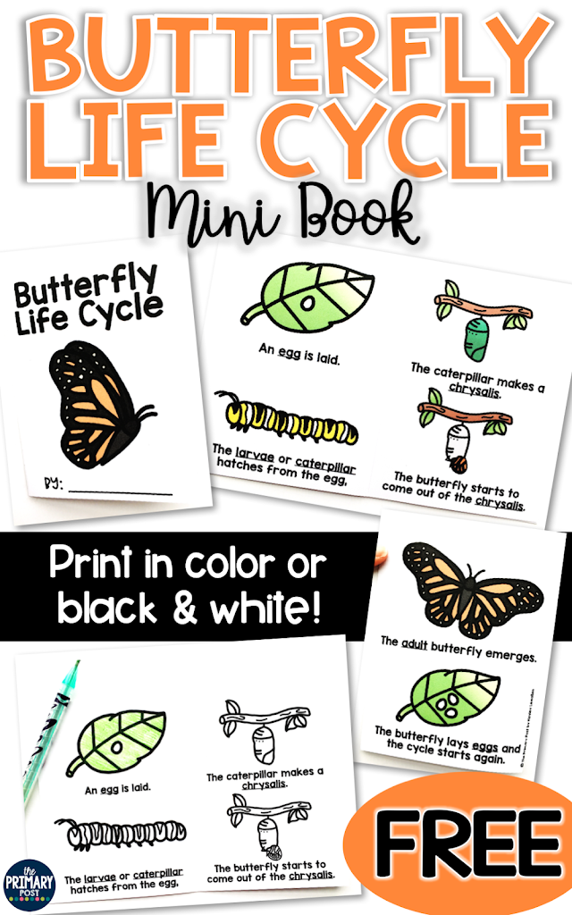Butterfly Life Cycle Mini Book Freebie