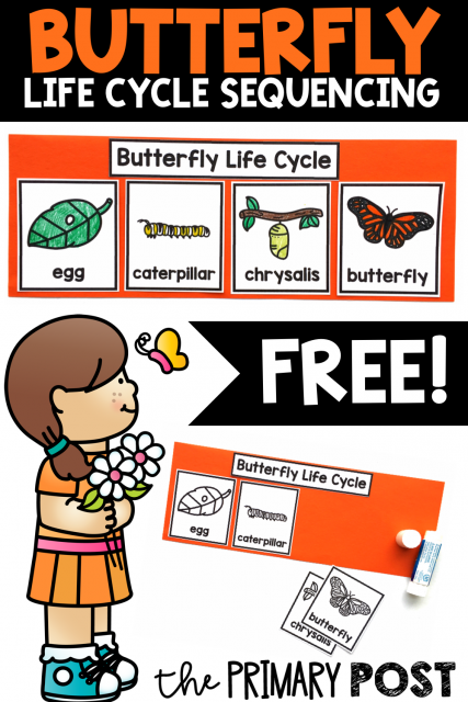 Butterfly Life Cycle Sequencing FREEBIE